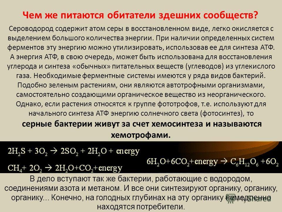 Чем же питаются обитатели здешних сообществ? Сероводород содержит атом серы в восстановленном виде, легко окисляется с выделением большого количества энергии. При наличии определенных систем ферментов эту энергию можно утилизировать, использовав ее д