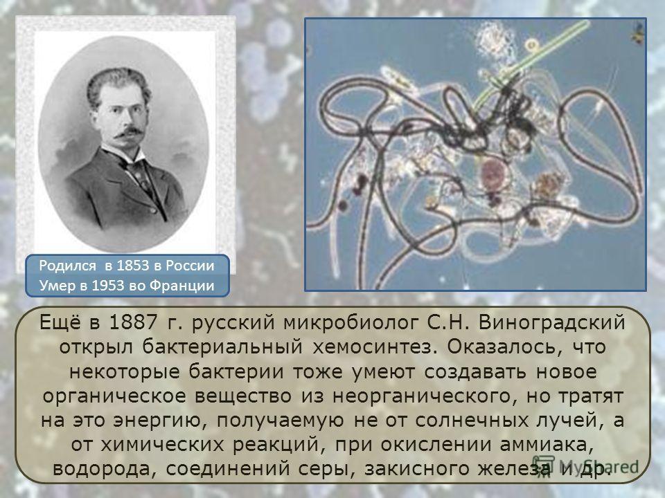 Ещё в 1887 г. русский микробиолог С.Н. Виноградский открыл бактериальный хемосинтез. Оказалось, что некоторые бактерии тоже умеют создавать новое органическое вещество из неорганического, но тратят на это энергию, получаемую не от солнечных лучей, а