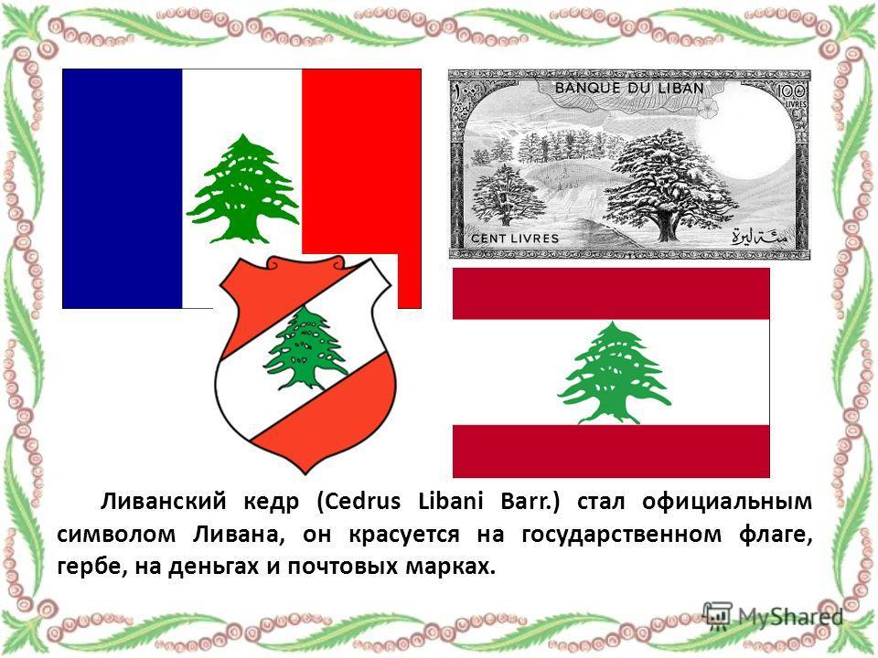 Ливанский кедр (Cedrus Libani Barr.) стал официальным символом Ливана, он красуется на государственном флаге, гербе, на деньгах и почтовых марках.