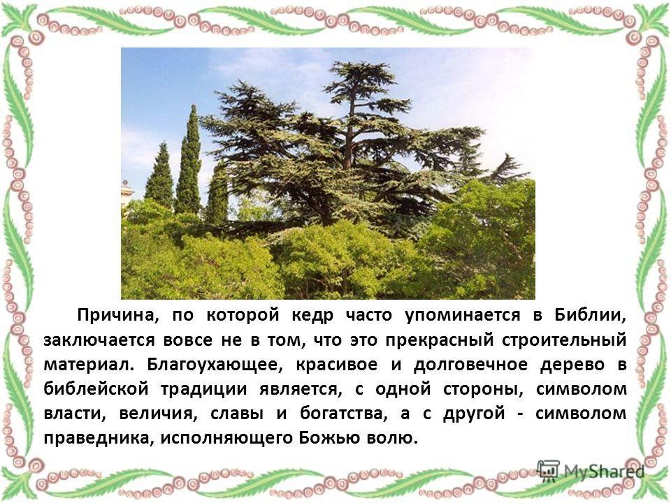 Причина, по которой кедр часто упоминается в Библии, заключается вовсе не в том, что это прекрасный строительный материал. Благоухающее, красивое и долговечное дерево в библейской традиции является, с одной стороны, символом власти, величия, славы и