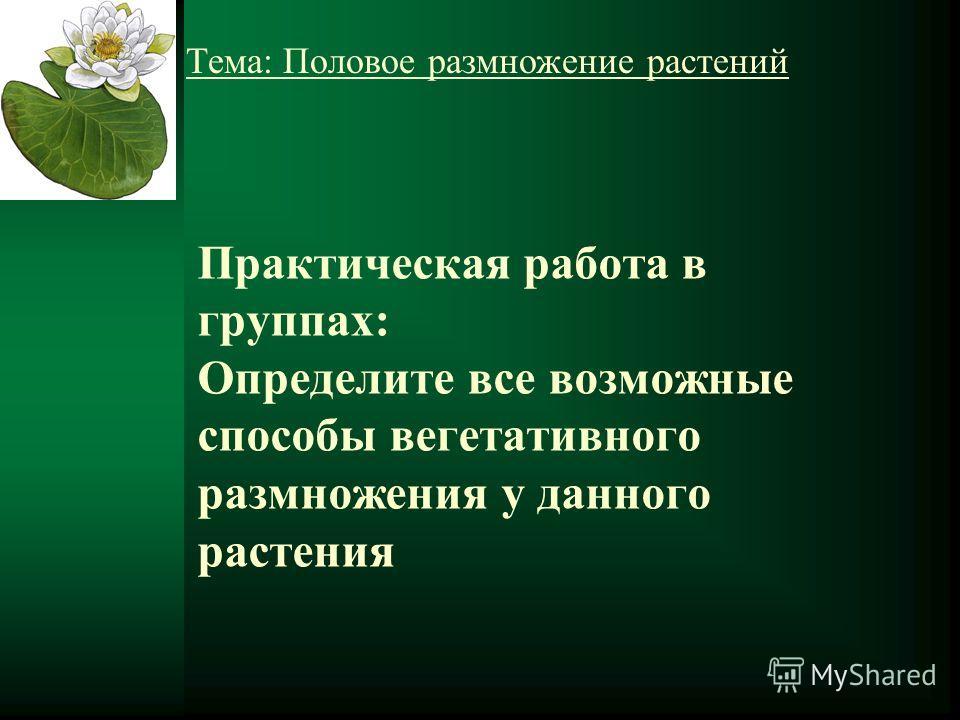 Практическая работа в группах: Определите все возможные способы вегетативного размножения у данного растения Тема: Половое размножение растений