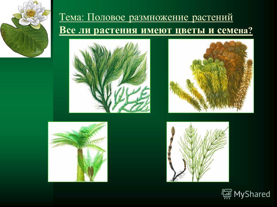 Тема: Половое размножение растений Все ли растения имеют цветы и семе на?