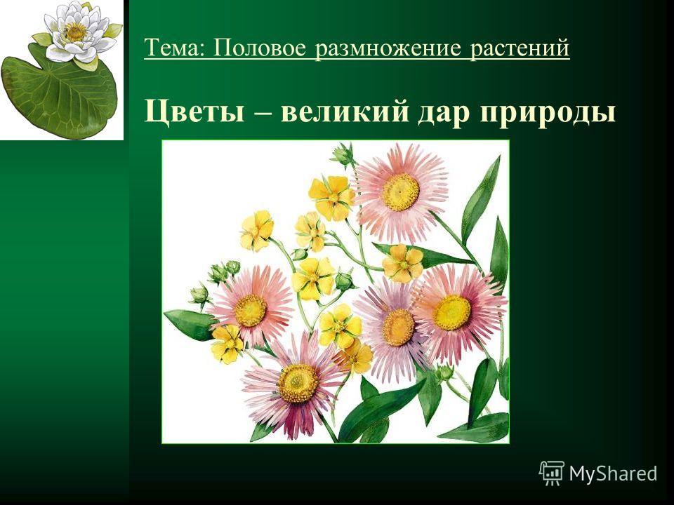 Тема: Половое размножение растений Цветы – великий дар природы