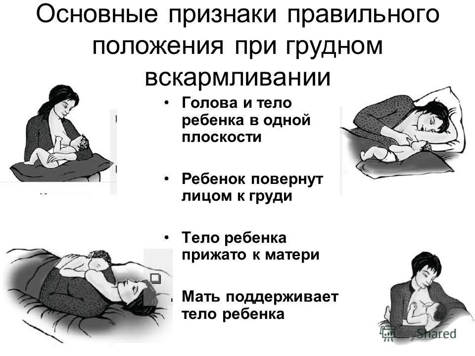 Основные признаки правильного положения при грудном вскармливании Голова и тело ребенка в одной плоскости Ребенок повернут лицом к груди Тело ребенка прижато к матери Мать поддерживает тело ребенка