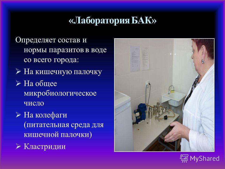 «Лаборатория БАК» Определяет состав и нормы паразитов в воде со всего города: На кишечную палочку На общее микробиологическое число На колефаги (питательная среда для кишечной палочки) Кластридии