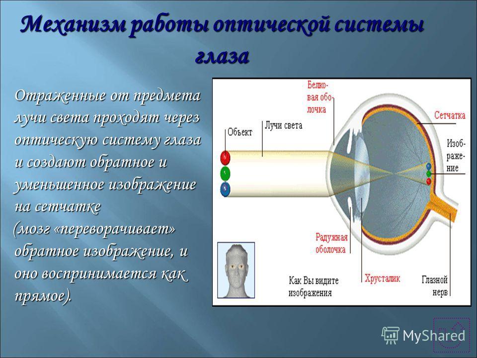 Механизм работы оптической системы глаза Отраженные от предмета лучи света проходят через оптическую систему глаза и создают обратное и уменьшенное изображение на сетчатке Отраженные от предмета лучи света проходят через оптическую систему глаза и со