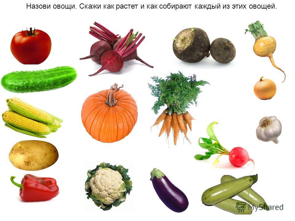 Назови овощи. Скажи как растет и как собирают каждый из этих овощей.