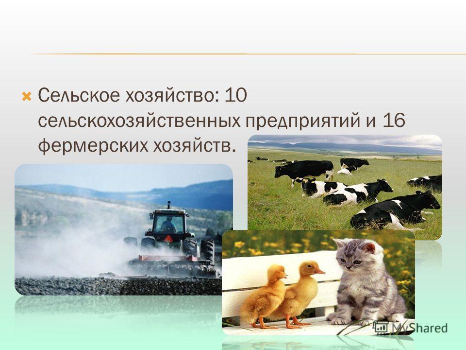 Сельское хозяйство: 10 сельскохозяйственных предприятий и 16 фермерских хозяйств.