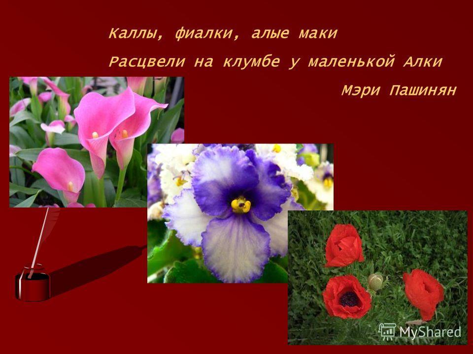 Каллы, фиалки, алые маки Расцвели на клумбе у маленькой Алки Мэри Пашинян