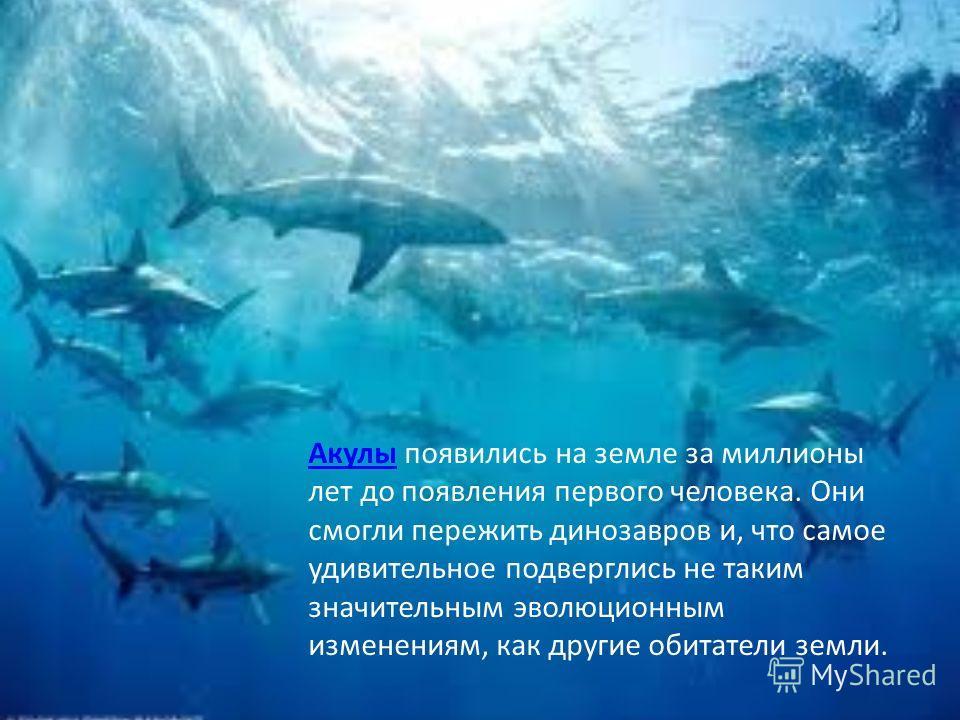 Протасов Ярослав 3 «д» класс