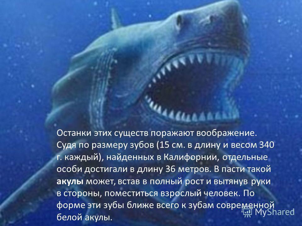 АкулыАкулы появились на земле за миллионы лет до появления первого человека. Они смогли пережить динозавров и, что самое удивительное подверглись не таким значительным эволюционным изменениям, как другие обитатели земли.