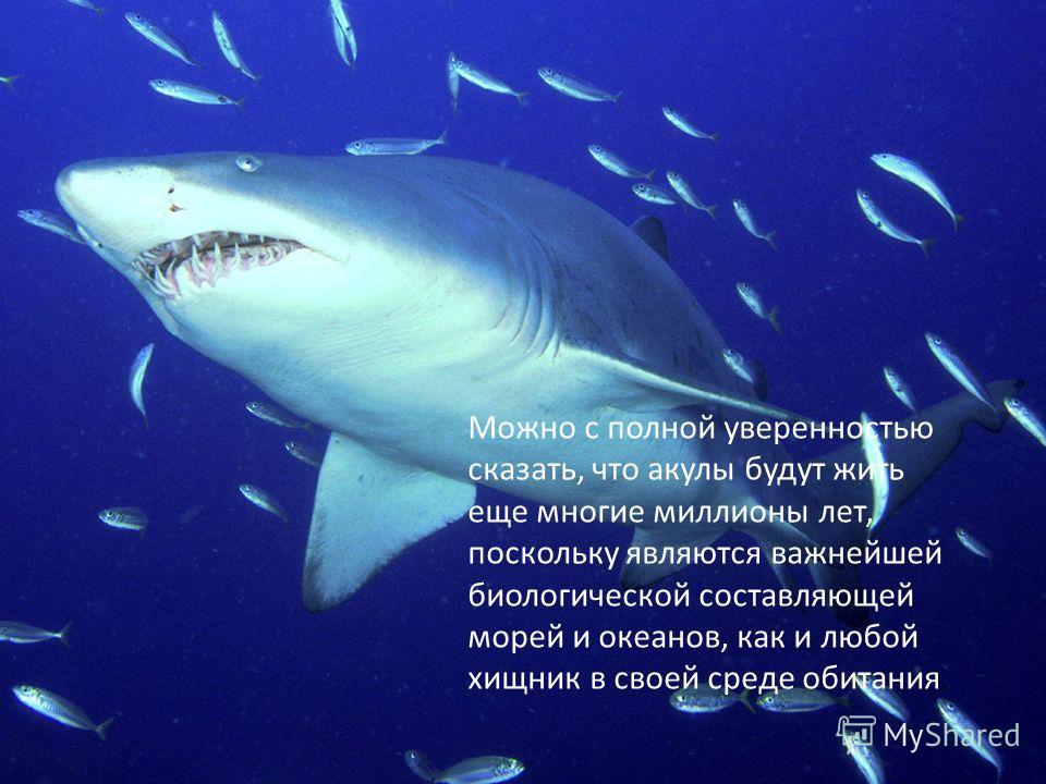 Характерной чертой всех акул является хрящевой, а не костный скелет, 5-7 жаберных щелей по бокам от головы, отсутсвие жаберной крышки, кожа, покрытая плакоидной чешуей, верхняя челюсть, соединенная с черепной коробкой только соединительнотканными свя