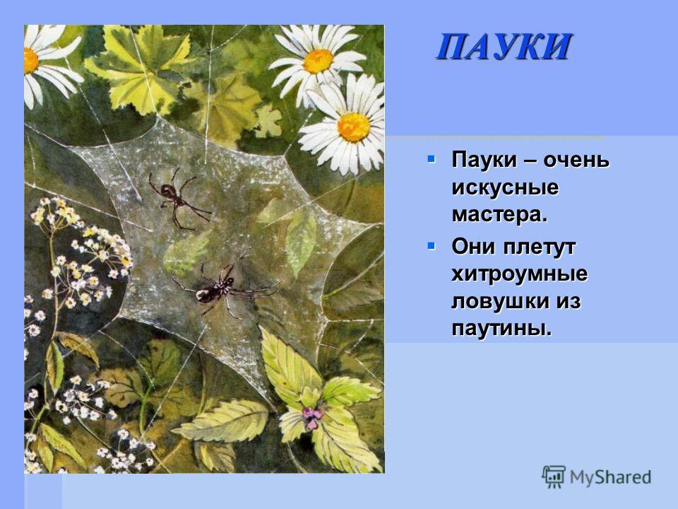 ПАУКИ Пауки – очень искусные мастера. Пауки – очень искусные мастера. Они плетут хитроумные ловушки из паутины. Они плетут хитроумные ловушки из паутины.
