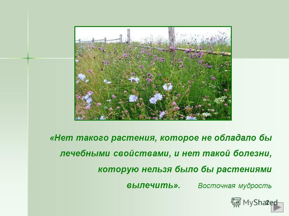 «Нет такого растения, которое не обладало бы лечебными свойствами, и нет такой болезни, которую нельзя было бы растениями вылечить». Восточная мудрость 2