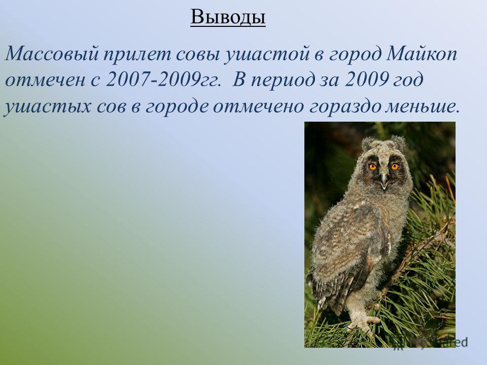 Массовый прилет совы ушастой в город Майкоп отмечен с 2007-2009гг. В период за 2009 год ушастых сов в городе отмечено гораздо меньше. Выводы
