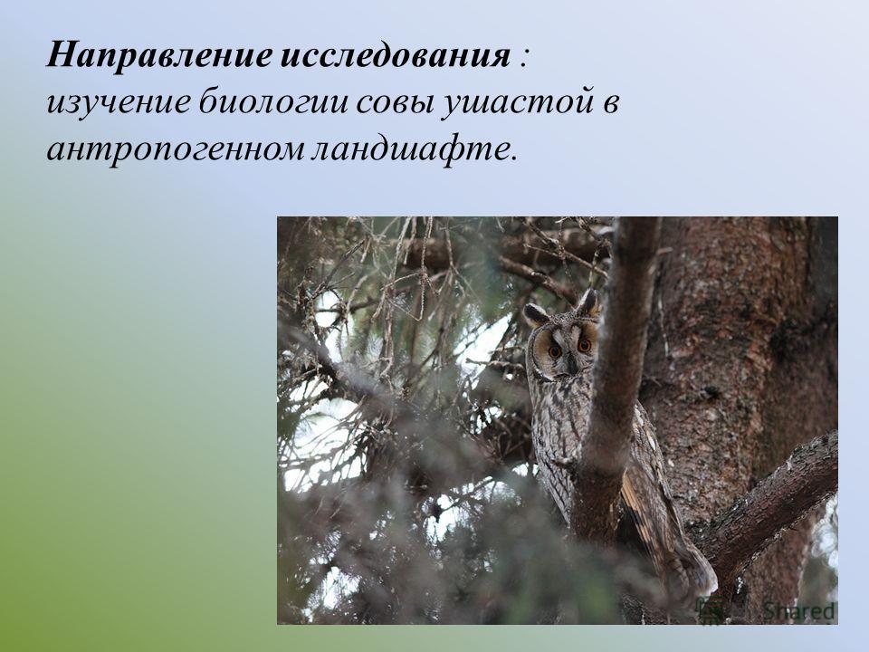 Направление исследования : изучение биологии совы ушастой в антропогенном ландшафте.