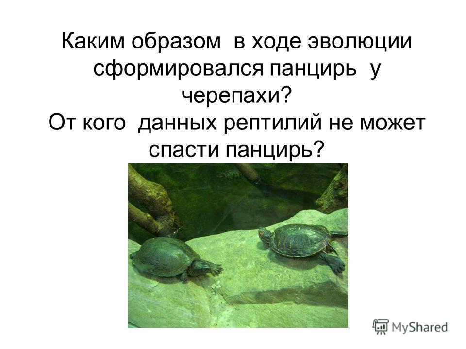 Каким образом в ходе эволюции сформировался панцирь у черепахи? От кого данных рептилий не может спасти панцирь?