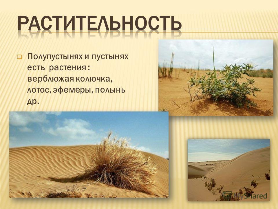 Полупустынях и пустынях есть растения : верблюжая колючка, лотос, эфемеры, полынь др.