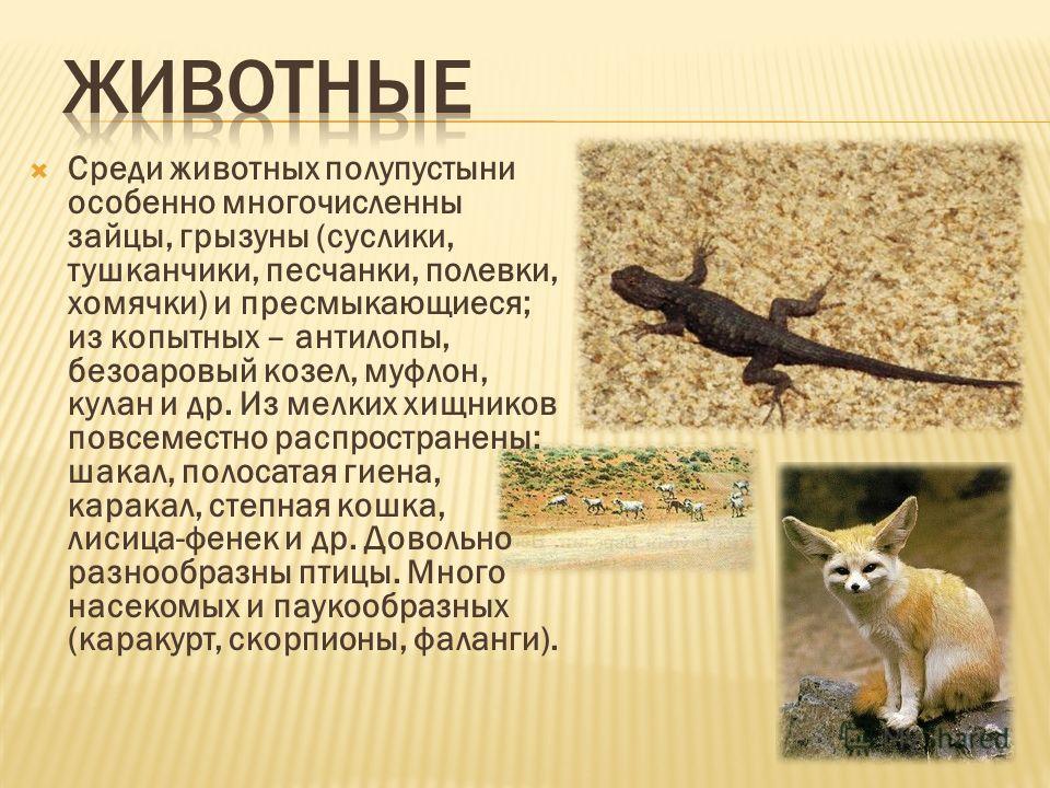 Среди животных полупустыни особенно многочисленны зайцы, грызуны (суслики, тушканчики, песчанки, полевки, хомячки) и пресмыкающиеся; из копытных – антилопы, безоаровый козел, муфлон, кулан и др. Из мелких хищников повсеместно распространены: шакал, п