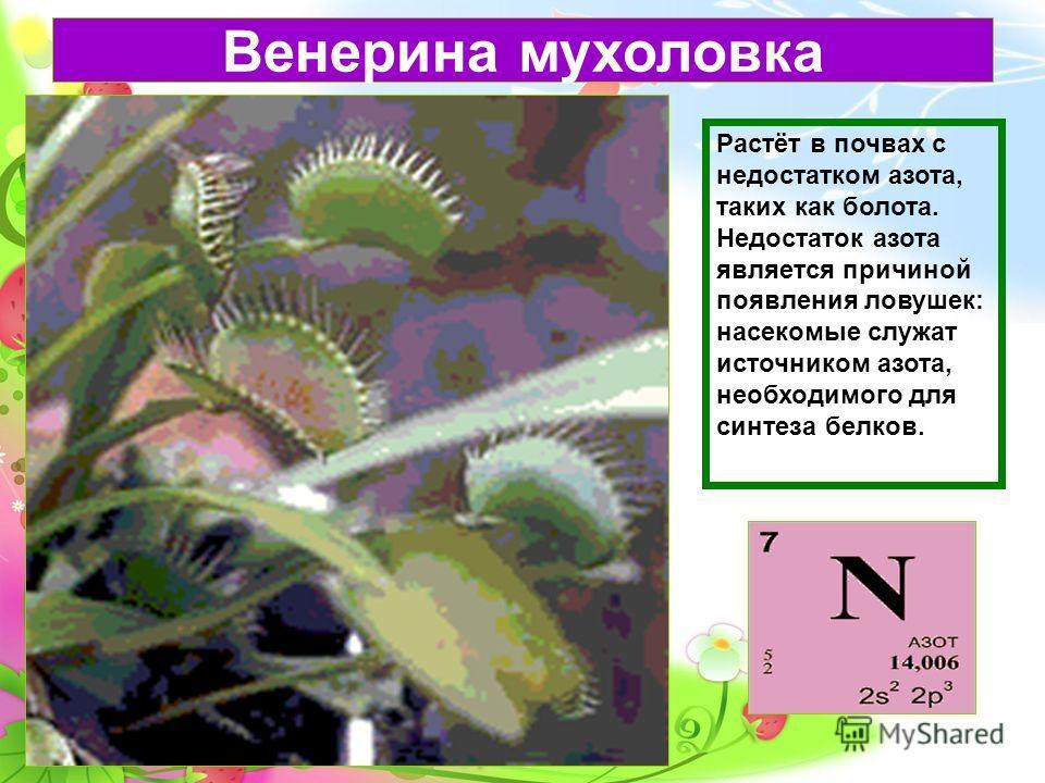 Венерина мухоловка Растёт в почвах с недостатком азота, таких как болота. Недостаток азота является причиной появления ловушек: насекомые служат источником азота, необходимого для синтеза белков.
