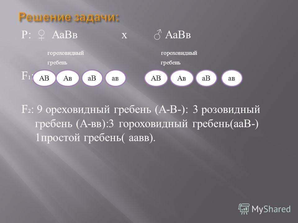 Р : АаВв х АаВв гороховидный гороховидный гребень гребень F 1 : F 2 : 9 ореховидный гребень ( А - В -): 3 розовидный гребень ( А - вв ):3 гороховидный гребень ( ааВ -) 1 простой гребень ( аавв ). АВАваВавАВАваВав