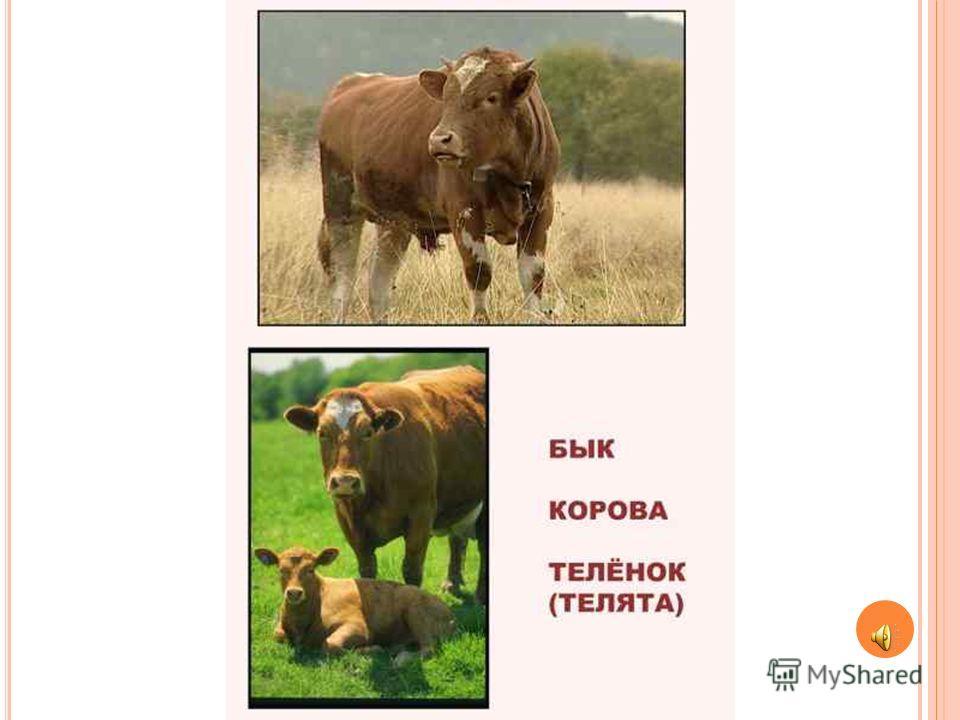 Животные для детей, домашние животные и их звуки