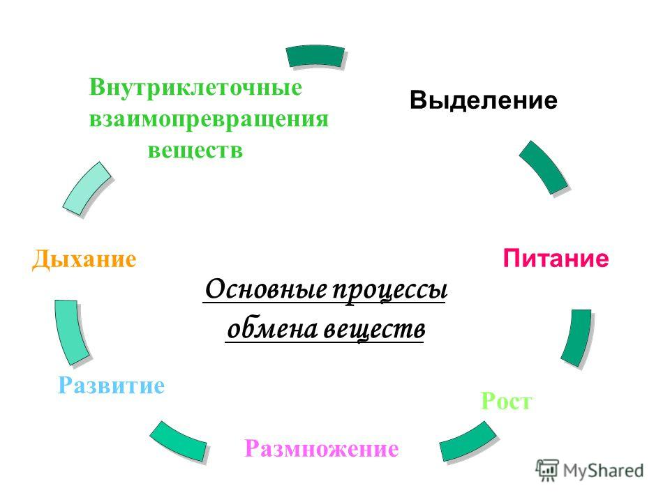 Основные процессы обмена веществ. Дыхание Развитие Размножение Рост Питание Выделение Внутриклеточные взаимопревращения веществ