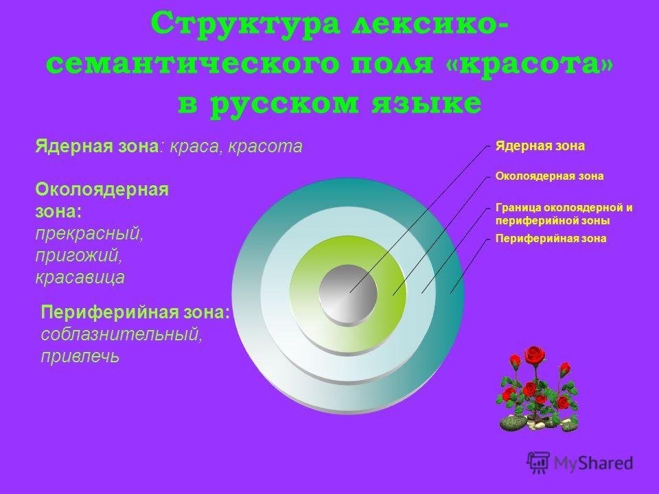 Структура лексико- семантического поля «красота» в русском языке Ядерная зона Околоядерная зона Граница околоядерной и периферийной зоны Периферийная зона Ядерная зона: краса, красота Околоядерная зона: прекрасный, пригожий, красавица Периферийная зо
