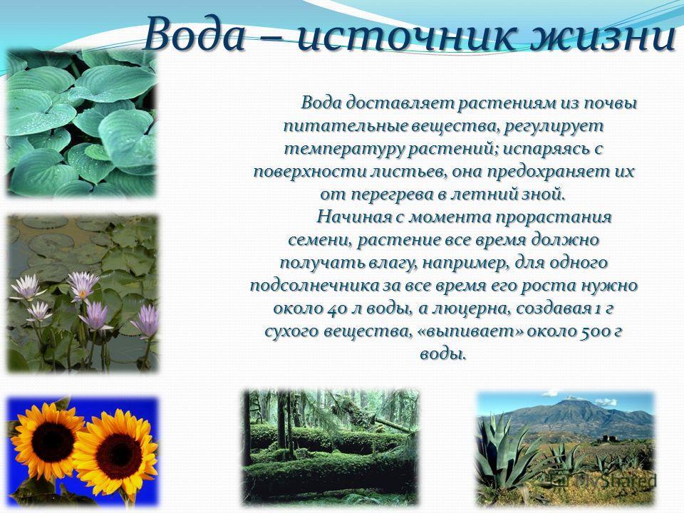 Вода – источник жизни Вода доставляет растениям из почвы питательные вещества, регулирует температуру растений; испаряясь с поверхности листьев, она предохраняет их от перегрева в летний зной. Вода доставляет растениям из почвы питательные вещества,