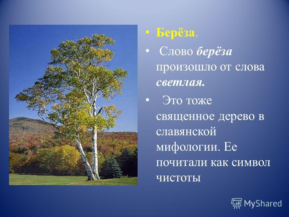 Берёза. Слово берёза произошло от слова светлая. Это тоже священное дерево в славянской мифологии. Ее почитали как символ чистоты