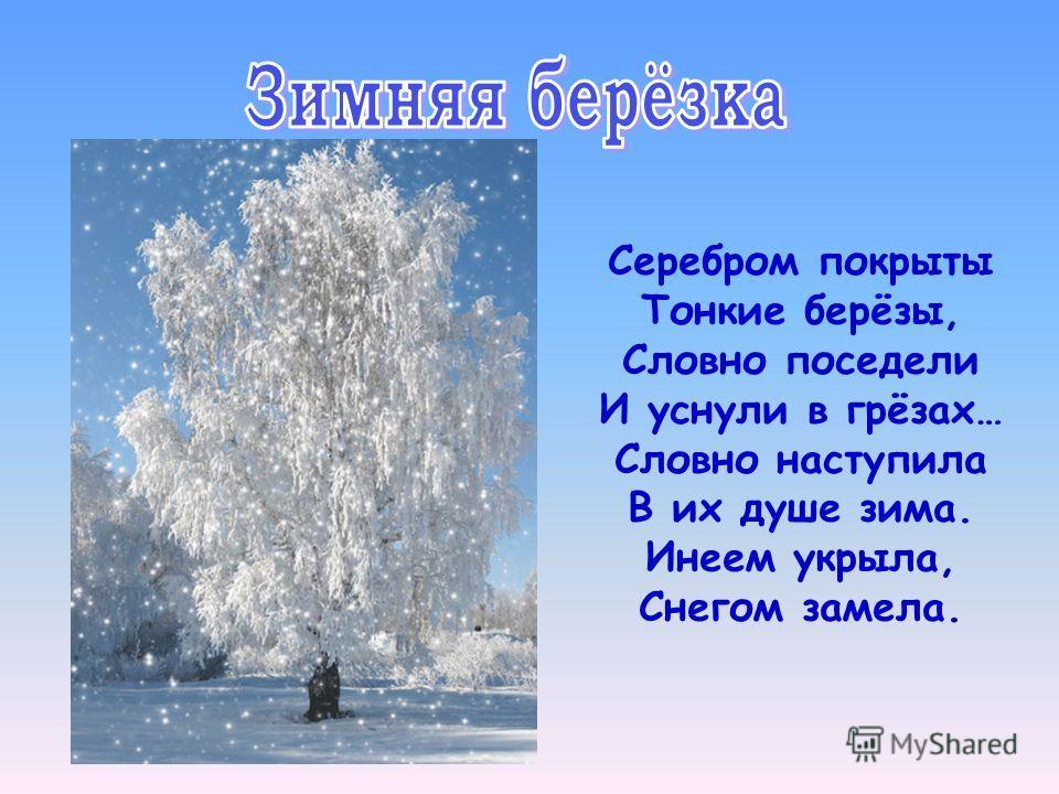 Серебром покрыты Тонкие берёзы, Словно поседели И уснули в грёзах… Словно наступила В их душе зима. Инеем укрыла, Снегом замела.