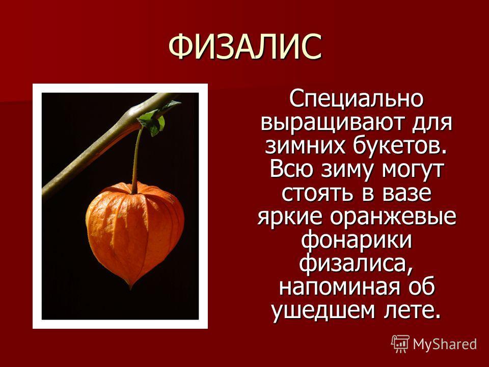 ФИЗАЛИС Специально выращивают для зимних букетов. Всю зиму могут стоять в вазе яркие оранжевые фонарики физалиса, напоминая об ушедшем лете.