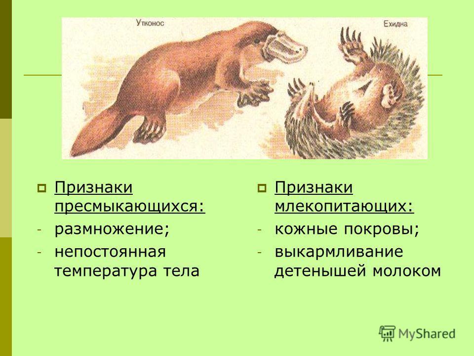 Признаки пресмыкающихся: - размножение; - непостоянная температура тела Признаки млекопитающих: - кожные покровы; - выкармливание детенышей молоком