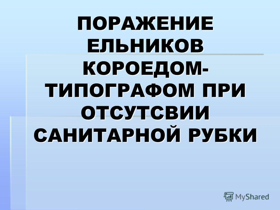 ПОРАЖЕНИЕ ЕЛЬНИКОВ КОРОЕДОМ- ТИПОГРАФОМ ПРИ ОТСУТСВИИ САНИТАРНОЙ РУБКИ