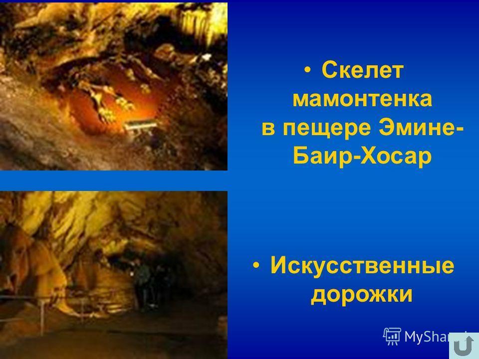 Искусственные дорожки Скелет мамонтенка в пещере Эмине- Баир-Хосар