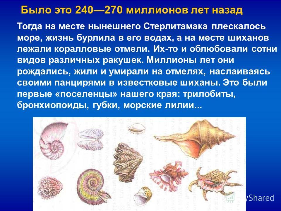 Тогда на месте нынешнего Стерлитамака плескалось море, жизнь бурлила в его водах, а на месте шиханов лежали коралловые отмели. Их-то и облюбовали сотни видов различных ракушек. Миллионы лет они рождались, жили и умирали на отмелях, наслаиваясь своими