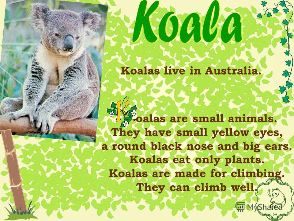 oalas are small animals. They have small yellow eyes, a round black nose and big ears. Koalas eat only plants. Koalas are made for climbing. They can climb well. Koalas live in Australia.