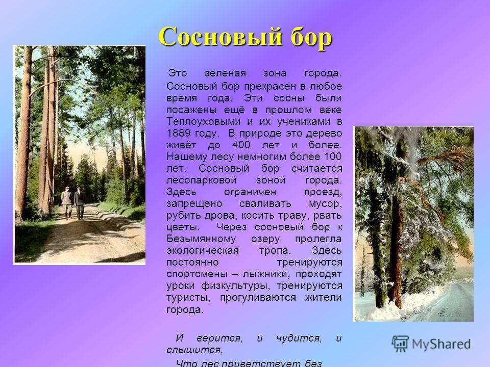 Сосновый бор Это зеленая зона города. Сосновый бор прекрасен в любое время года. Эти сосны были посажены ещё в прошлом веке Теплоуховыми и их учениками в 1889 году. В природе это дерево живёт до 400 лет и более. Нашему лесу немногим более 100 лет. Со