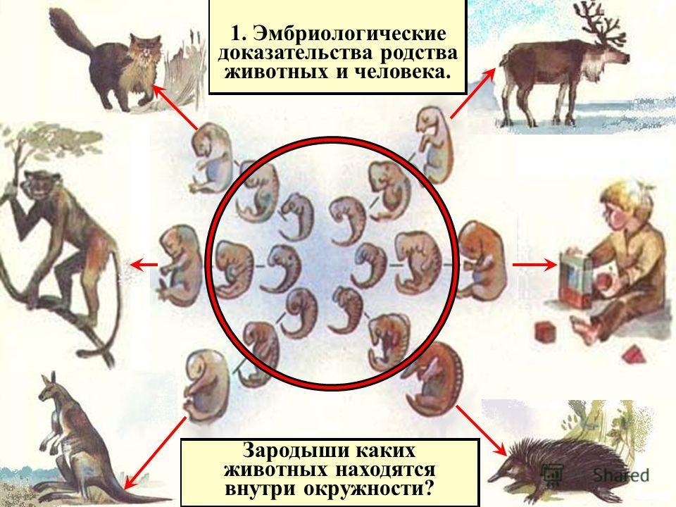 1. Эмбриологические доказательства родства животных и человека. Зародыши каких животных находятся внутри окружности?