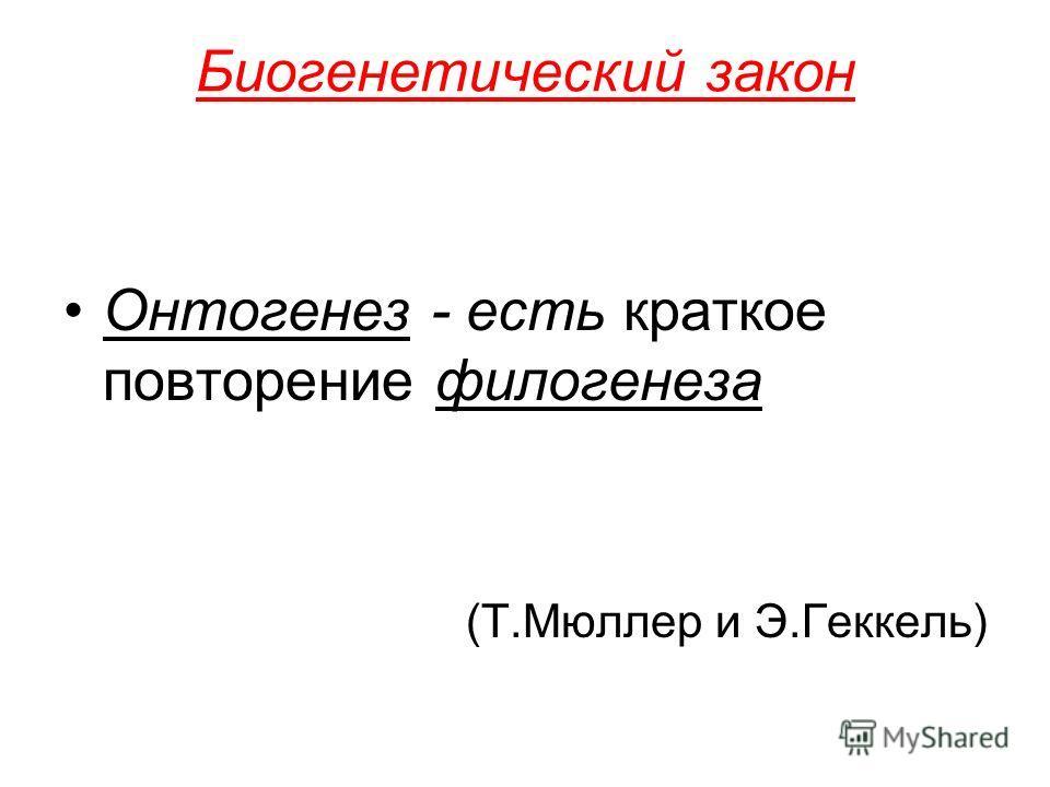 Биогенетический закон Онтогенез - есть краткое повторение филогенеза (Т.Мюллер и Э.Геккель)
