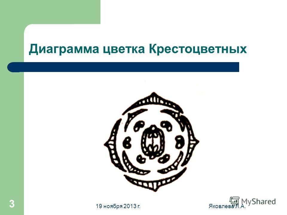 19 ноября 2013 г.Яковлева Л.А. 3 Диаграмма цветка Крестоцветных