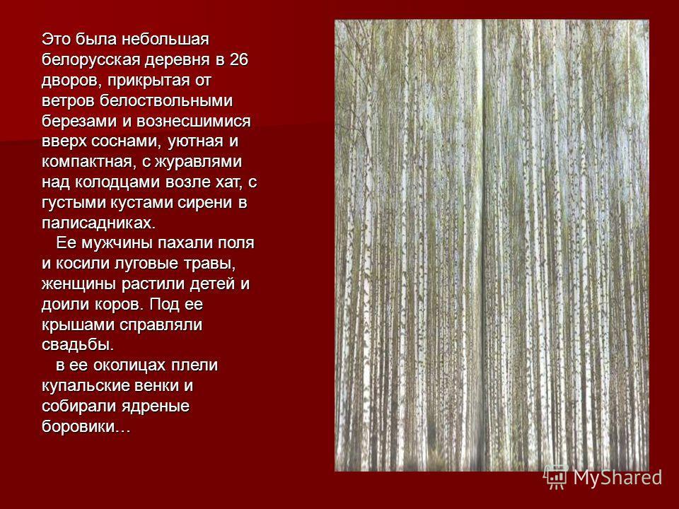 Это была небольшая белорусская деревня в 26 дворов, прикрытая от ветров белоствольными березами и вознесшимися вверх соснами, уютная и компактная, с журавлями над колодцами возле хат, с густыми кустами сирени в палисадниках. Ее мужчины пахали поля и