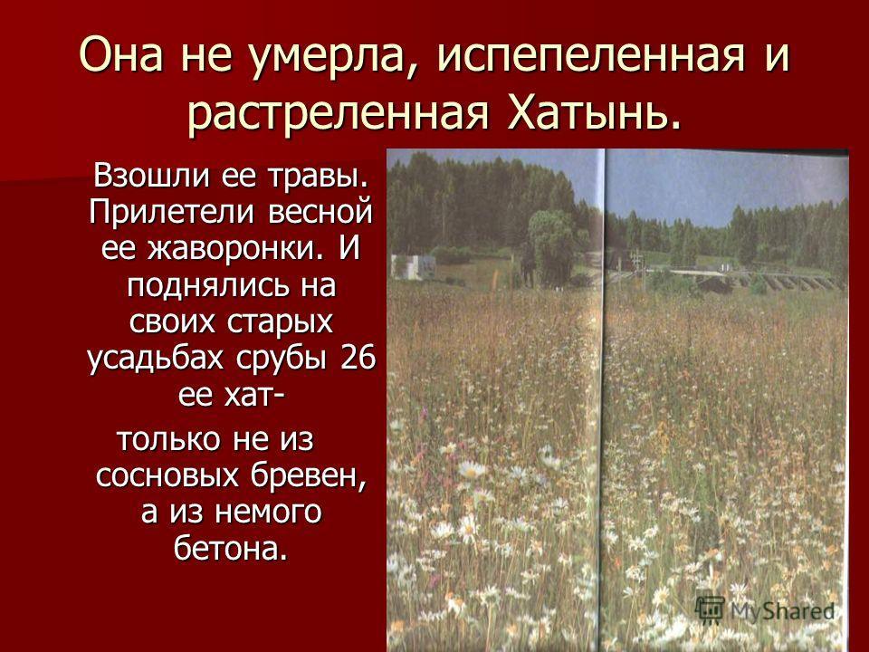 Она не умерла, испепеленная и растреленная Хатынь. Взошли ее травы. Прилетели весной ее жаворонки. И поднялись на своих старых усадьбах срубы 26 ее хат- Взошли ее травы. Прилетели весной ее жаворонки. И поднялись на своих старых усадьбах срубы 26 ее