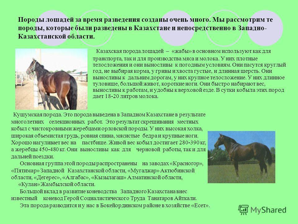 Породы лошадей за время разведения созданы очень много. Мы рассмотрим те породы, которые были разведены в Казахстане и непосредственно в Западно- Казахстанской области. Казахская порода лошадей – «жабы» в основном используют как для транспорта, так и