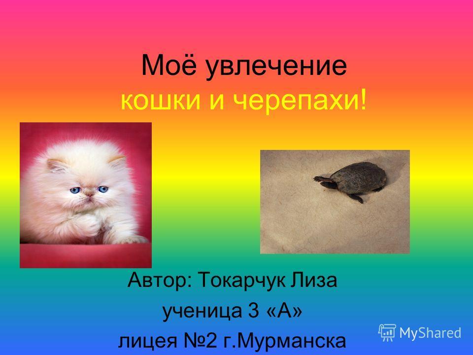 Моё увлечение кошки и черепахи! Автор: Токарчук Лиза ученица 3 «А» лицея 2 г.Мурманска