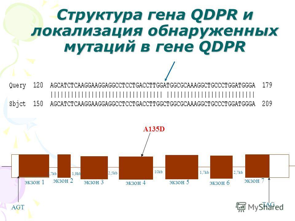 AGT TAG 2,7kb1,9kb 10kb 2,5kb 1,7kb экзон 1 экзон 2 экзон 3 экзон 4 экзон 5 экзон 6 A135D экзон 7 2,7kb Структура гена QDPR и локализация обнаруженных мутаций в гене QDPR
