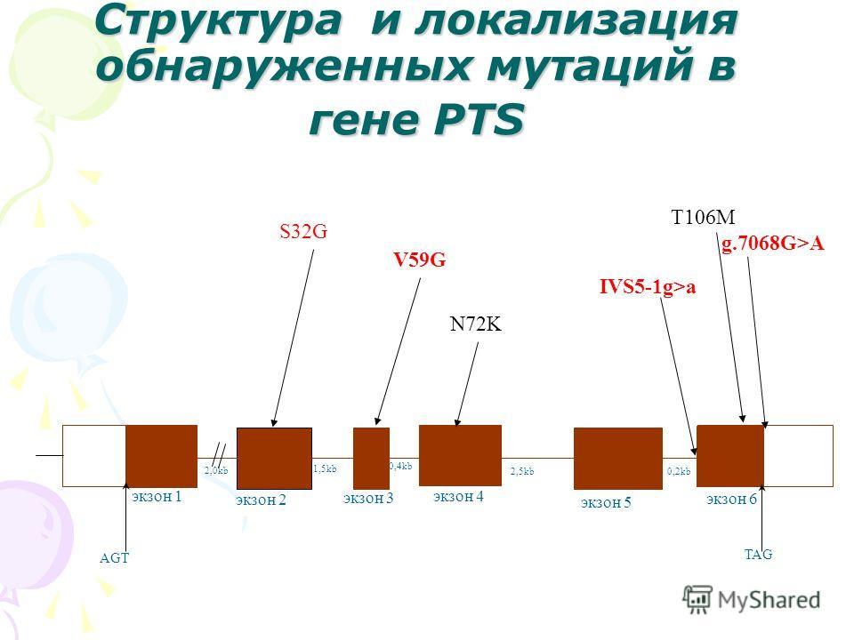 Структура и локализация обнаруженных мутаций в гене PTS 2,0kb 1,5kb 0,4kb 2,5kb0,2kb экзон 1 экзон 2 экзон 3 экзон 4 экзон 5 экзон 6 AGT TAG N72K V59G S32G IVS5-1g>a T106M g.7068G>A