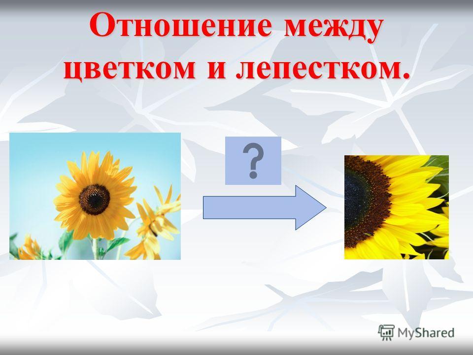 Отношение между объектами. Назови отношение между цветком и его лепестком.