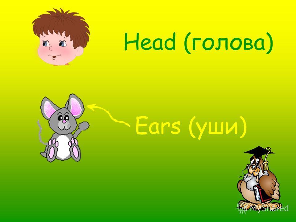 Head (голова) Ears (уши)