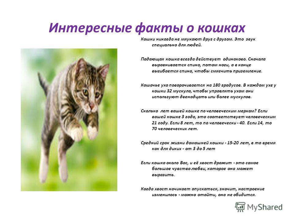 Интересные факты о кошках Кошки никогда не мяукают друг с другом. Это звук специально для людей. Падающая кошка всегда действует одинаково. Сначала выравнивается спина, потом ноги, а в конце выгибается спина, чтобы смягчить приземление. Кошачье ухо п